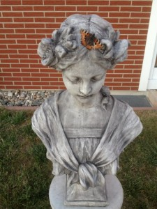 48-Schmetterlinge